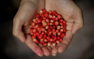 Forgotten Foods. What are they, and why they do matter?